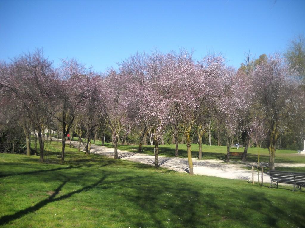 Sakura di Via Panama 1.JPG