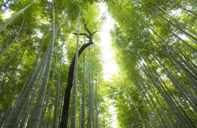 arashiyama-bamboo-forest.jpg