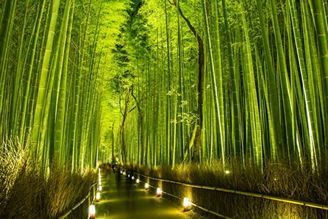 arashiyama-takenomori.jpg