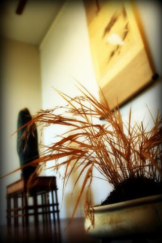 suiseki con erba accompagnamento.jpg