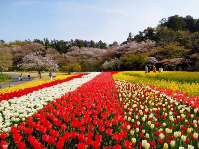 Hamamatsu Flower Park in Shizuoka.jpeg