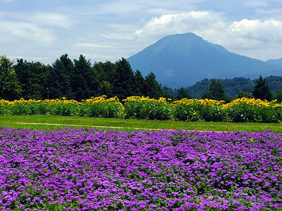 Tottori_Hanakairo Flower Park.jpg