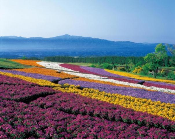 Kuju Flower Park in Taketa City_Oita.jpeg