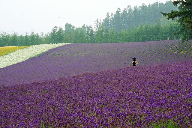 Furano_Hokkaido.jpg