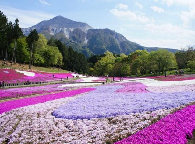 Hitsujiyama Park in Saitama.jpeg