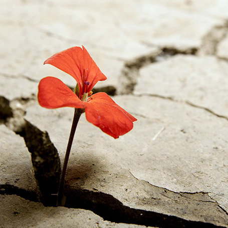 resilienza-mindfulness.jpg
